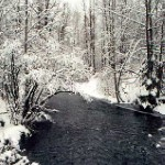 Campbell Creek in winter