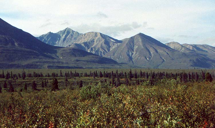 View from Muskeg